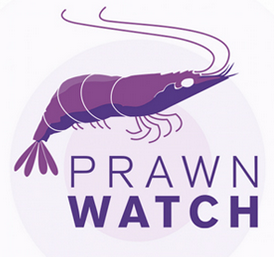 prawnwatch_splash