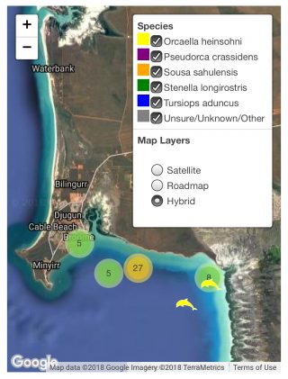 Observations of dolphin species in Roebuck bay, Broome.