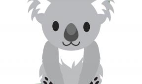 Koala Watch splash