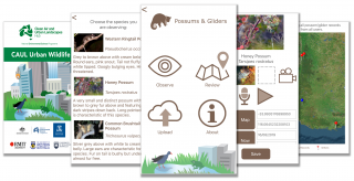 CAUL Urban Wildlife app - Possum and Glider module