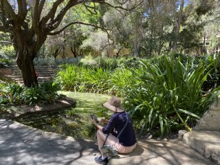 Frog survey in UWA's Sunken Garden