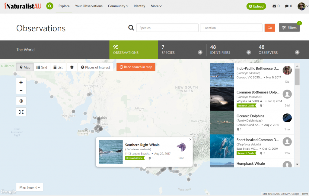 iNaturalist - Dolphin project map